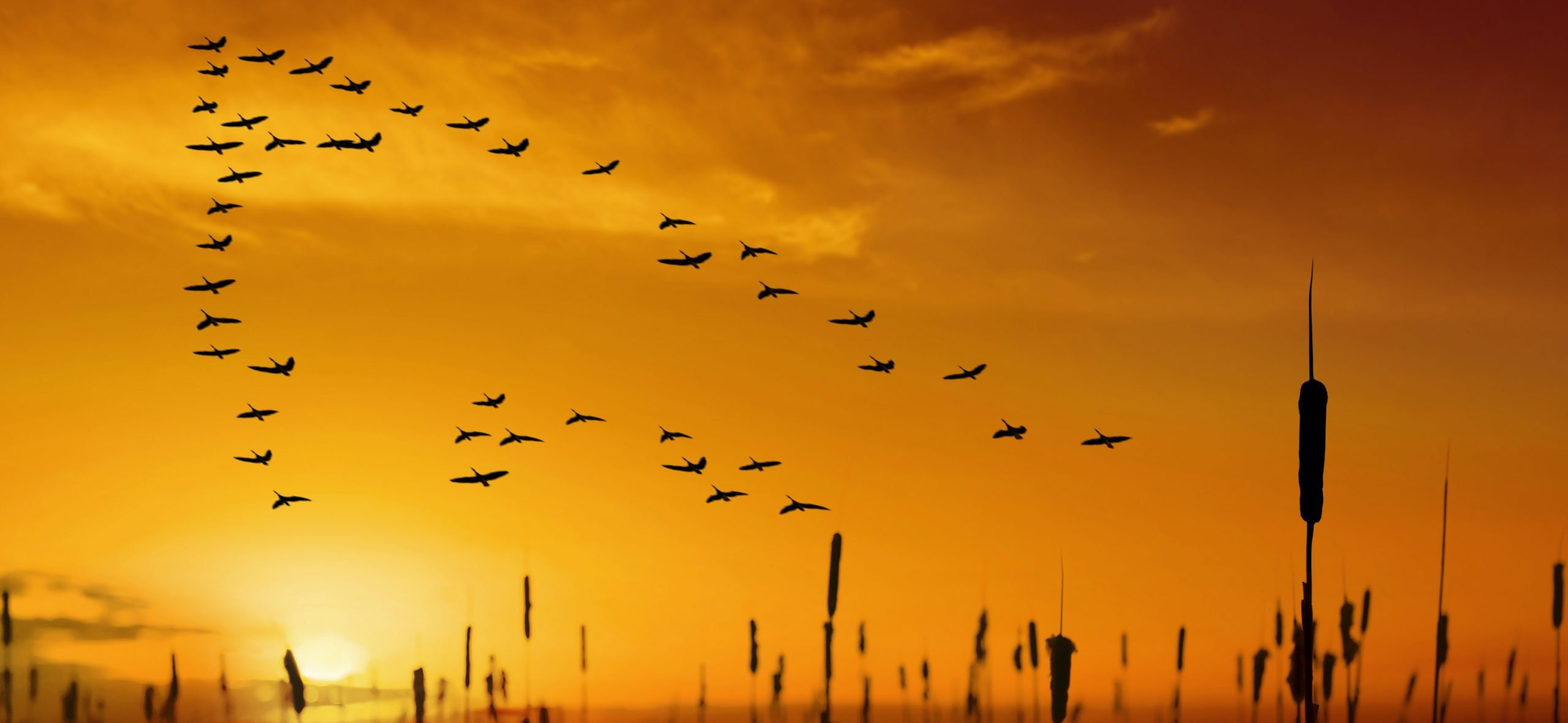 Birds flying into the sunrise